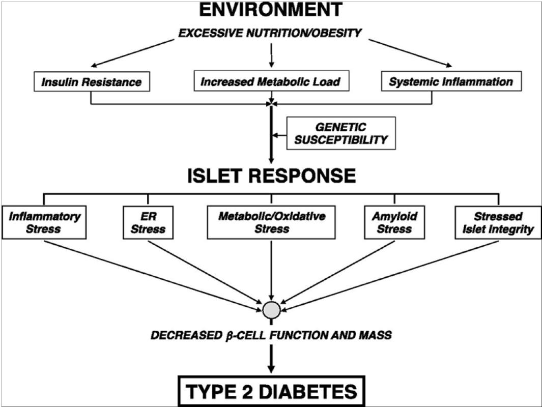 Role of vitamin D receptor (VDR) genetic polymorphism in